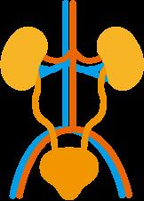慢性腎臓病(CKD)外来 腎臓
